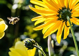 bee-in-the-approach-